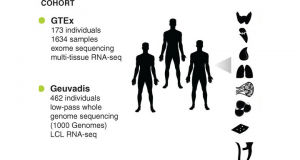 GTEx publishes results from RNA-Seq pilot study