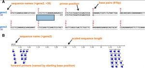 PrimerView –  forward and reverse primer design from multi-sequence datasets