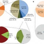 Integrated sequence and expression analysis of ovarian cancer structural variants underscores the importance of gene fusion regulation