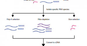 Introduction to RNA Sequencing and Analysis