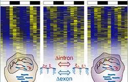 The hidden treasure in RNA-seq