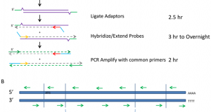 An Efficient Method for Identifying Gene Fusions by Targeted RNA Sequencing from Fresh Frozen and FFPE Samples