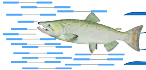 Salmon – Accurate, Versatile and Ultrafast Quantification from RNA-seq Data using Lightweight-Alignment