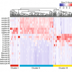 Single-cell RNA-seq transcriptome analysis of linear and circular RNAs
