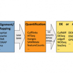 The best RNA-Seq analysis interface…depends on your persective