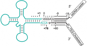 Capture, Unfolding, and Detection of Individual tRNA Molecules Using a Nanopore Device