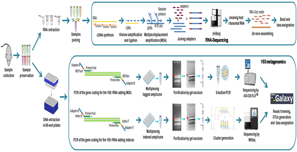 RNA-Seq Equally as Sensitive as 16S Metagenomics for Detection of Bacterial Pathogens