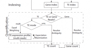 TEtranscripts – A package for including transposable elements in differential expression analysis of RNA-Seq datasets