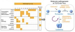 RNA-Seq unravels molecular changes in acute lymphoblastic leukemia (ALL)