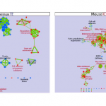 Defining cell lineages by single-cell RNA-Seq