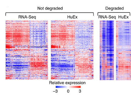 mRIN – direct assessment of genome-wide and gene-specific mRNA integrity from large-scale RNA-sequencing data