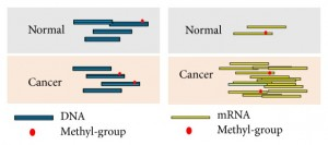 FET-HMM – for spatially enhanced detection of differentially methylated region from MeRIP-Seq data