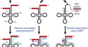By removing modified nucleotides that block reverse transcriptase, two methods have now made tRNAs amenable to RNA-seq.
