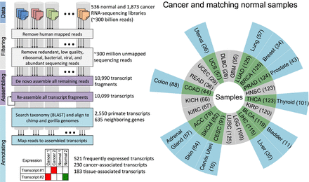 "Comprehensive assembly of ""unmappable"" reads from human RNA-Seq data"