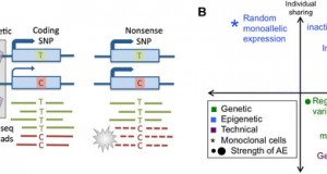 Tools & best practices for the high-throughput production of allelic expression data from RNA-sequencing data