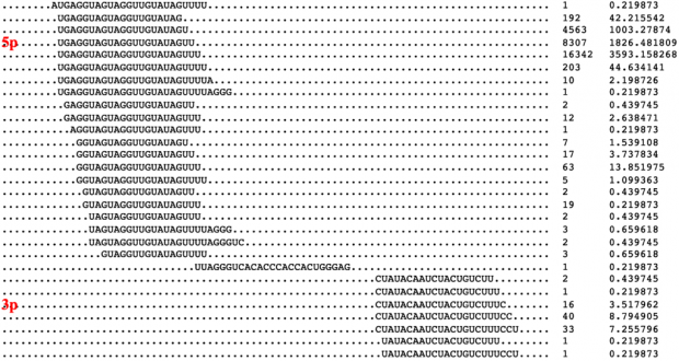 Bioinformatic Interrogation of 5p-arm and 3p-arm Specific miRNA Expression