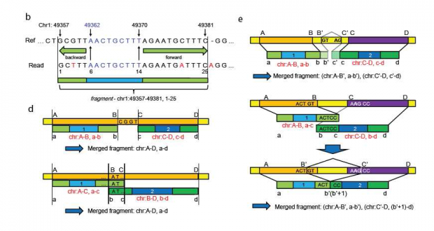 RASER – Reads Aligner for SNPs and Editing sites of RNA