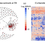 Sphinx – modeling transcriptional heterogeneity in single-cell RNA-Seq