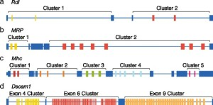 UConn researchers have sequenced the RNA of the most complicated gene known in nature