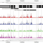 Modeling Exon-Specific Bias Distribution Improves the Analysis of RNA-Seq Data