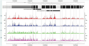 Modeling Exon-Specific Bias Distribution Improves the Analysis of RNA-Seq Data