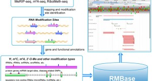RMBase – a resource for decoding the landscape of RNA modifications from high-throughput sequencing data