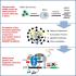 RNA-Seq analysis confirms small interfering RNA (siRNA) screen results