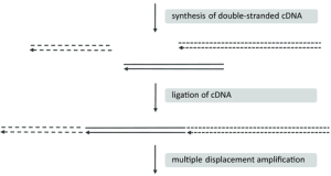 Whole-Transcriptome Amplification of Single Cells for Next-Generation Sequencing