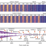 A Combination of ChIP-seq and RNA-seq reveals H3K4me3 landscape in the human brain