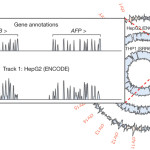 BrowserGenome.org – web-based RNA-Seq data analysis and visualization