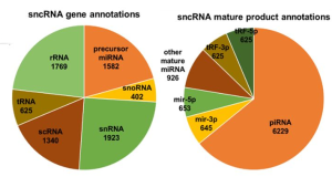 DASHR – a database of small human noncoding RNAs