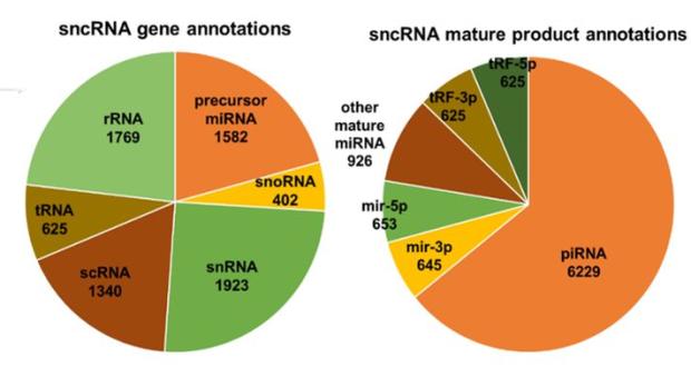 DASHR – a database of small human noncoding RNAs