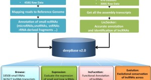 deepBase v2.0 – identification, expression, evolution and function of small RNAs, LncRNAs and circular RNAs from deep-sequencing data