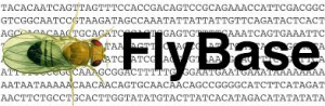 RNA-Seq Tools in FlyBase