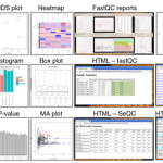 iSRAP – a one-touch research tool for rapid profiling of small RNA-seq data