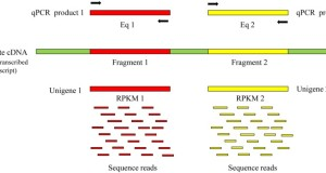 A method for the further assembly of targeted unigenes in a transcriptome after assembly by Trinity