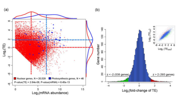 Ribosome profiling reveals dynamic translational landscape in maize seedlings