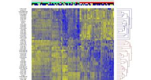 A bias reduction small RNA deep sequencing protocol reveals signature miRNAs