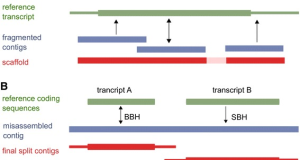 FRAMA – from RNA-seq data to annotated mRNA assemblies
