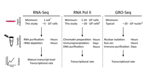iRNA-seq – computational method for genome-wide assessment of acute transcriptional regulation from total RNA-seq data
