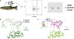 Single-Cell RNA-Sequencing Reveals a Continuous Spectrum of Differentiation in Hematopoietic Cells