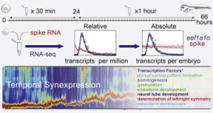 New method of measuring absolute RNA copy numbers redefines our ability to perform quantitative biology
