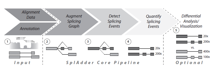 SplAdder – Identification, quantification and testing of alternative splicing events from RNA-Seq data
