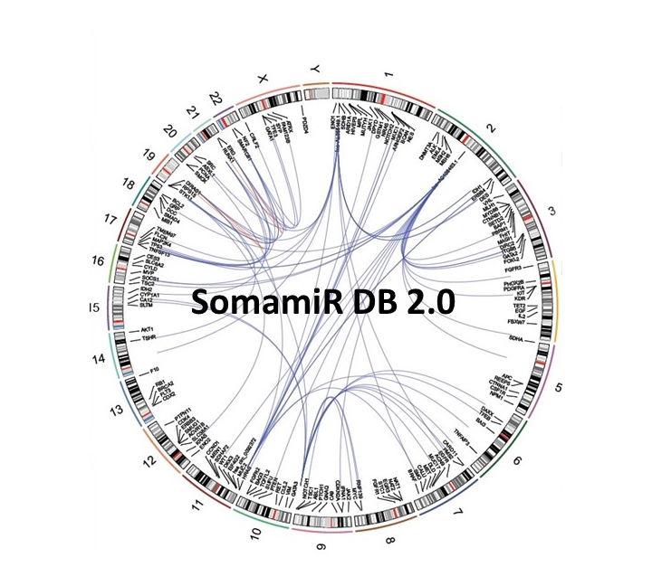 Bioinformatics Resources for MicroRNA Discovery