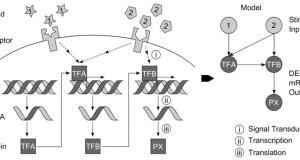 Modeling of gene regulatory networks from RNA-Seq data