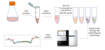 Systematic Mutation Detection in CHO Cells by Targeted RNA Sequencing