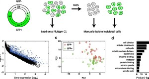 CEL-Seq2 – sensitive highly-multiplexed single-cell RNA-Seq