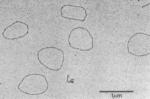 Curiously Circular RNA