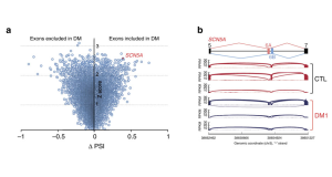 Sequencing Reveals Defective RNA Processing Linked to Cardiac Problems Seen in Myotonic Dystrophy