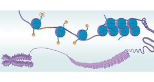 The Epigenetic Insights of RNA-Seq